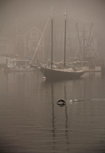 A Foggy Morning at Smith's Cove